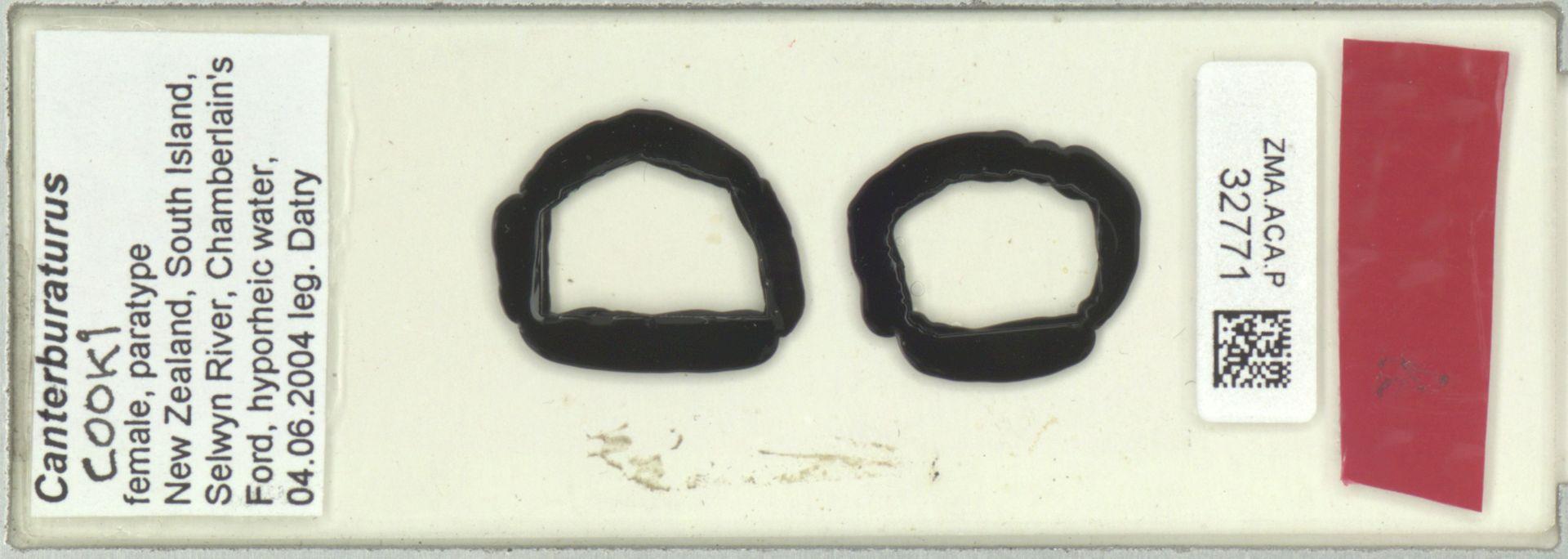 ZMA.ACA.P.32771 | Canterburaturus cooki Pesic & Smit, 2010