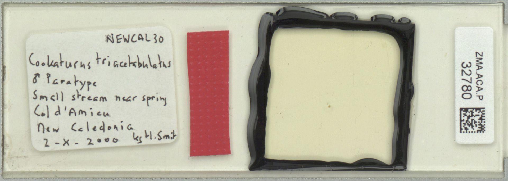 ZMA.ACA.P.32780 | Cookaturus triacetabulatus Smit, 2002