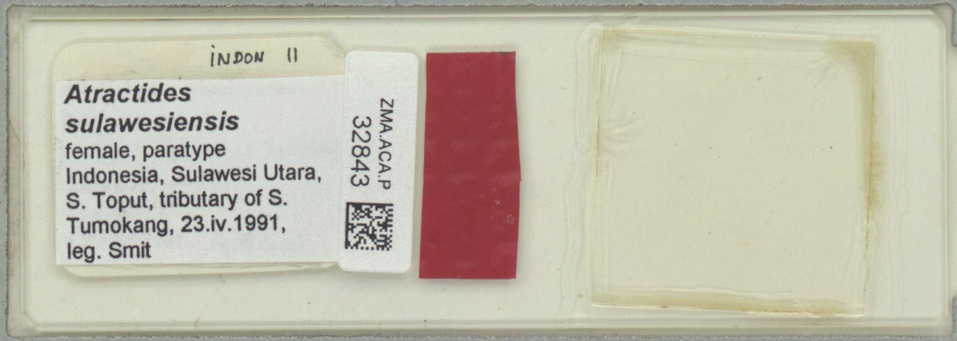 ZMA.ACA.P.32843 | Atractides sulawesiensis Smit & Pesic, 2009