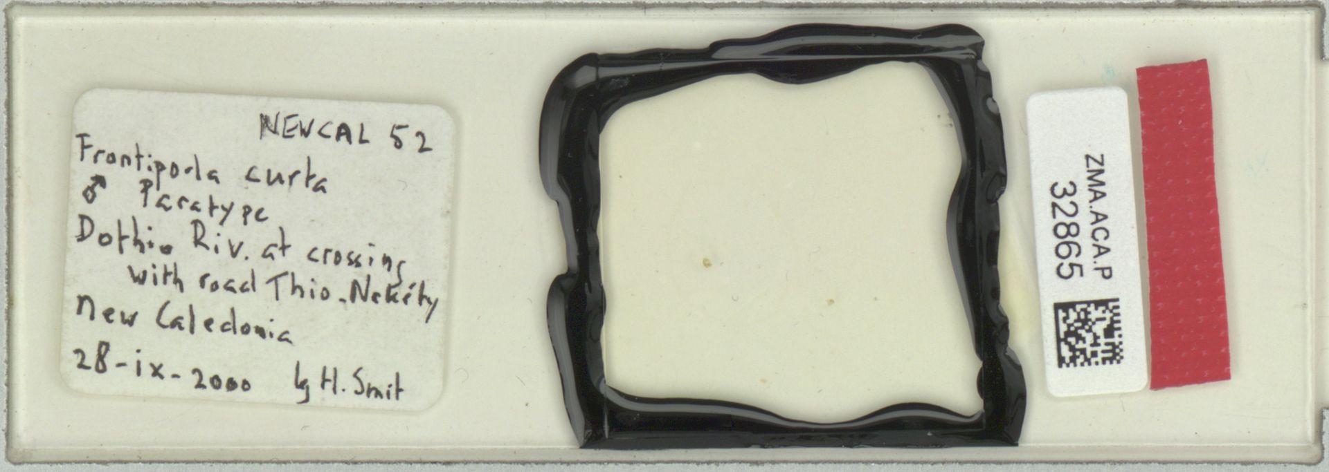 ZMA.ACA.P.32865 | Frontipoda curta Smit, 2002