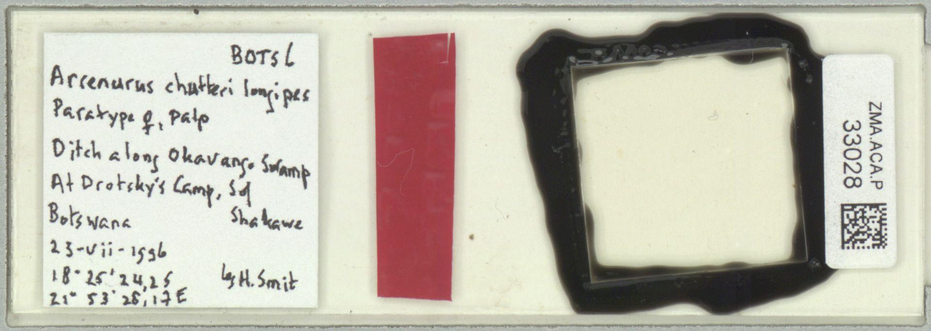 ZMA.ACA.P.33028 | Arrenurus chutteri longipes Smit, 2012