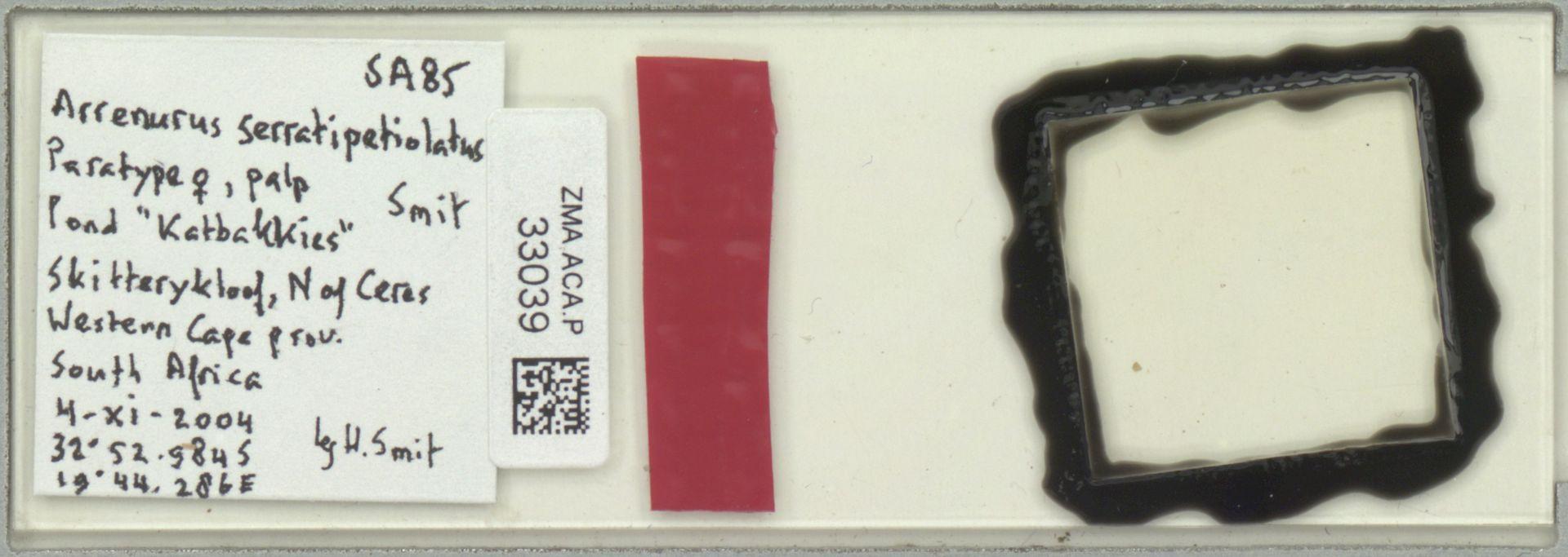 ZMA.ACA.P.33039 | Arrenurus serratipetiolatus Smit, 2012