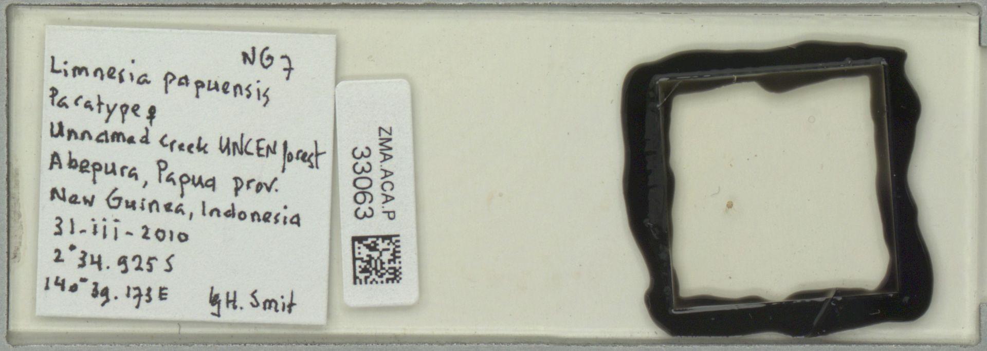 ZMA.ACA.P.33063 | Limnesia papuensis Smit, 2011
