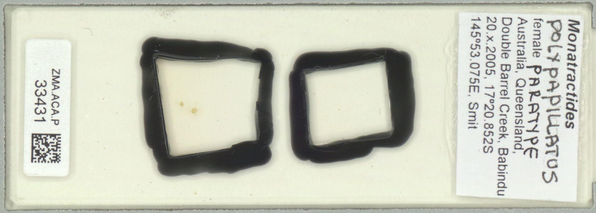 ZMA.ACA.P.33431 | Monatractides polypapillatus Pesic & Smit, 2012