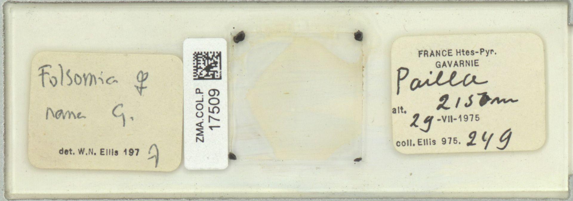 ZMA.COL.P.17509 | Folsomia nana G.