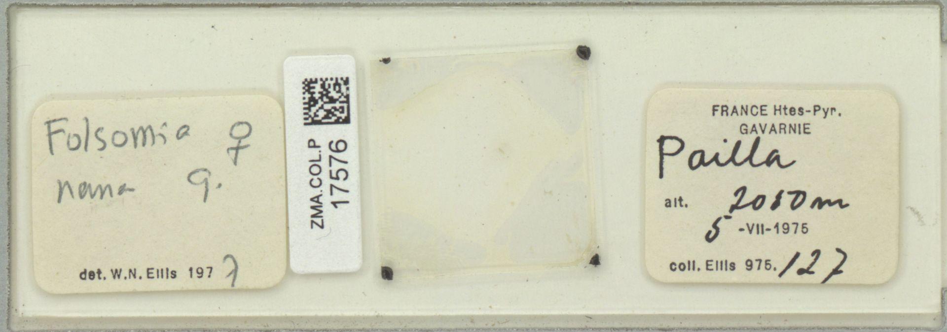 ZMA.COL.P.17576 | Folsomia nana G.