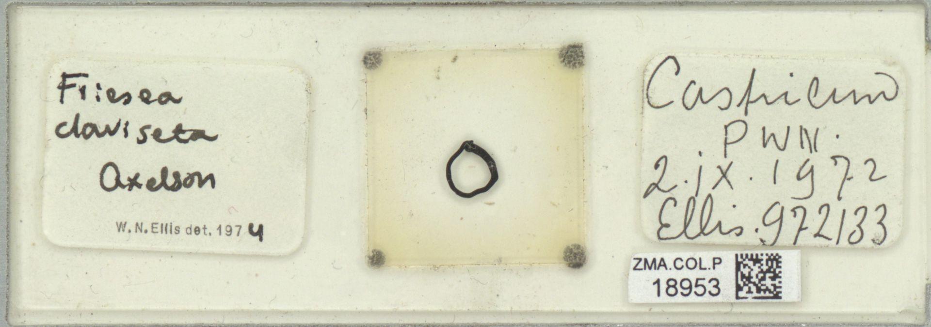 ZMA.COL.P.18953 | Friesea claviseta Axelson