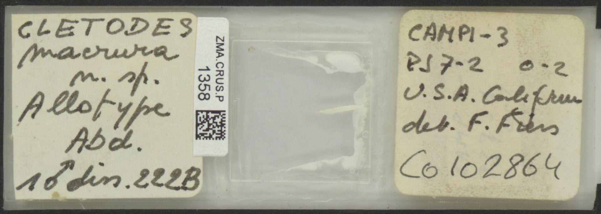 ZMA.CRUS.P.1358 | Cletodes macrura n. sp.