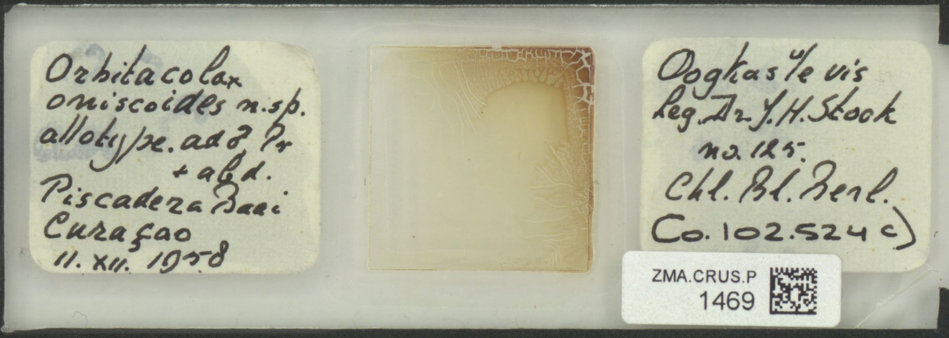 ZMA.CRUS.P.1469 | Orbitocolax oniscoides
