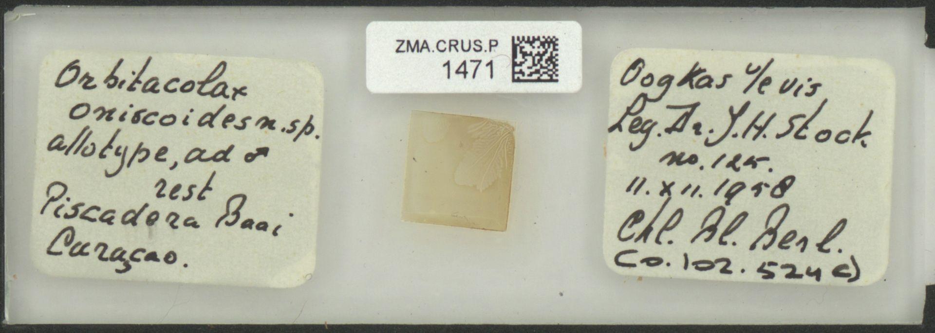 ZMA.CRUS.P.1471 | Orbitocolax oniscoides