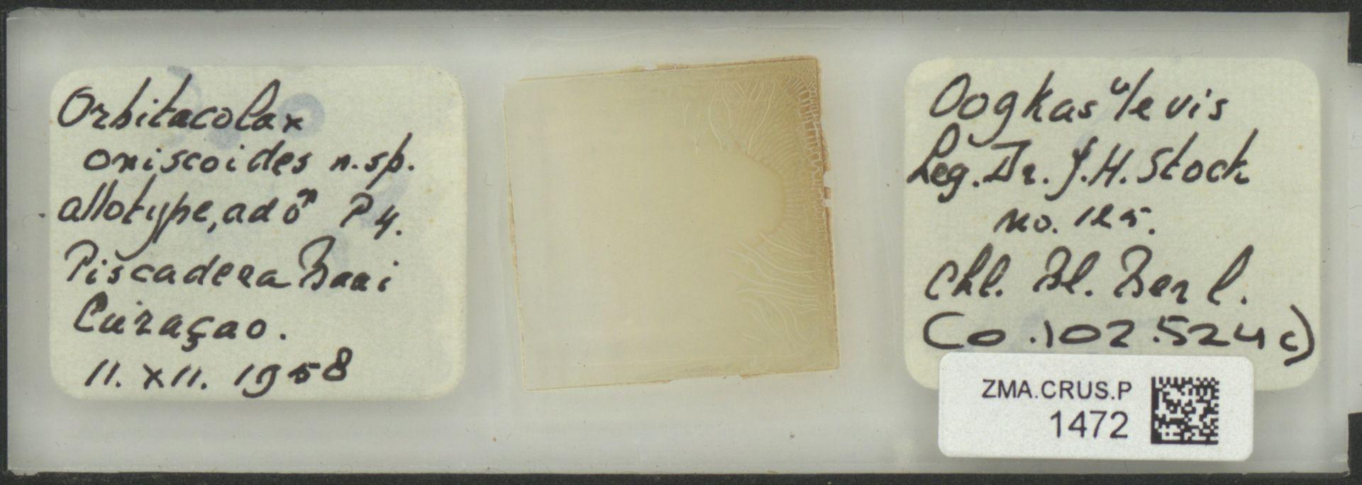 ZMA.CRUS.P.1472 | Orbitocolax oniscoides