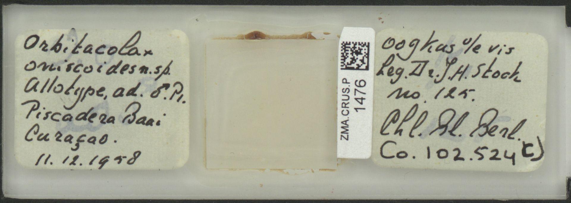 ZMA.CRUS.P.1476 | Orbitocolax oniscoides