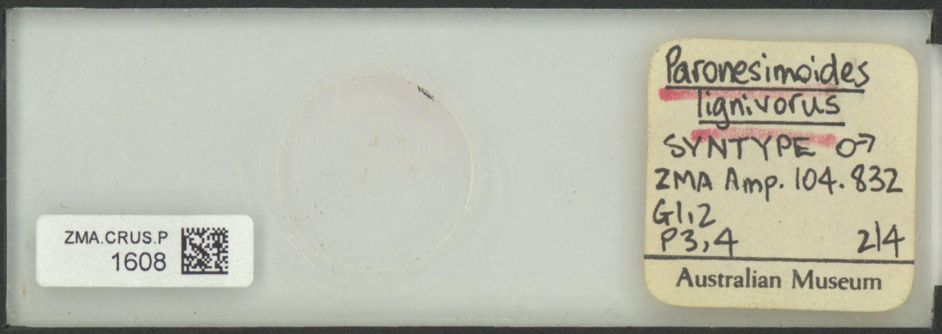 ZMA.CRUS.P.1608   Paronesimoides lignivorus