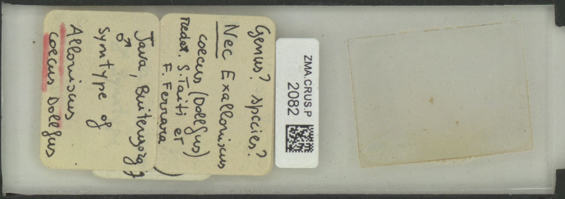 ZMA.CRUS.P.2082 | Exalloriscus coecus (Dollfus)