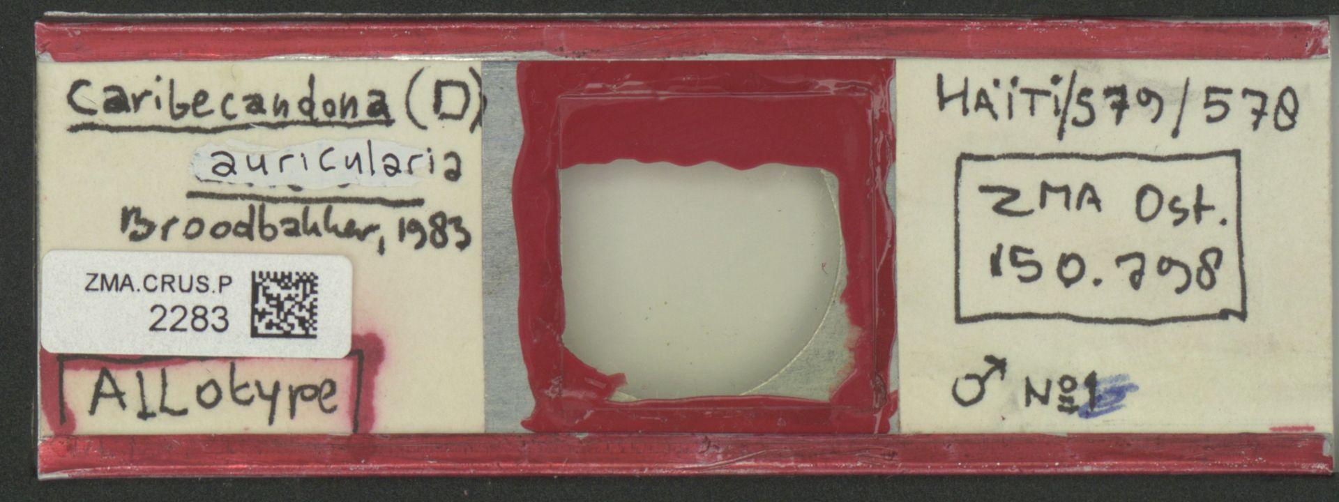 ZMA.CRUS.P.2283 | Caribecandona (D.) auricularia Broodbakker, 1983