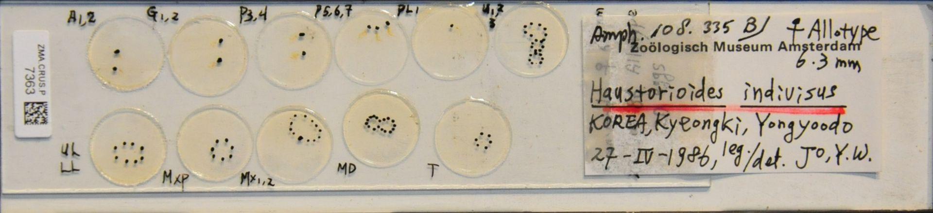 ZMA.CRUS.P.7363 | Haustorioides indivisus