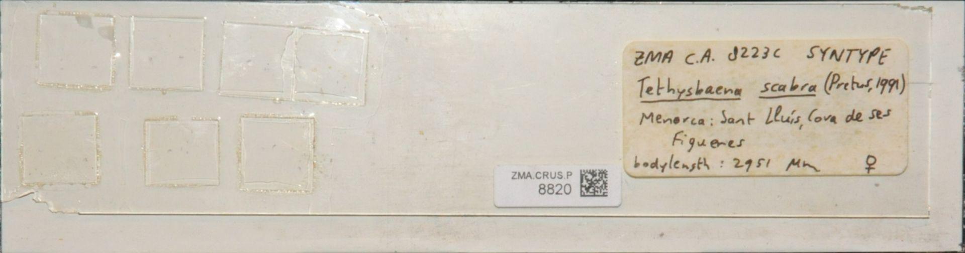ZMA.CRUS.P.8820 | Tethysbaena scabra (Pretus, 1991)