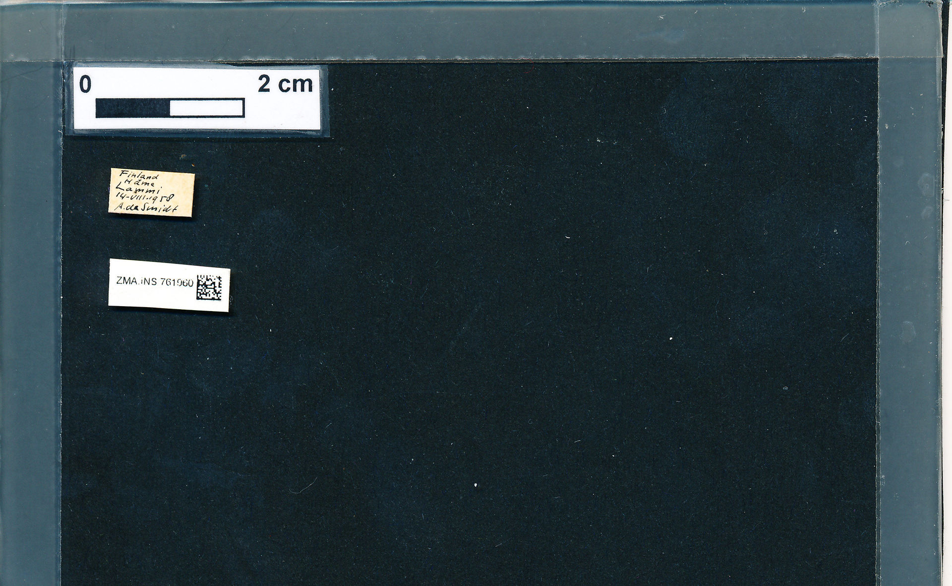 ZMA.INS.761960 | Bombus (Pyrobombus) pratorum pratorum Linnaeus, 1761