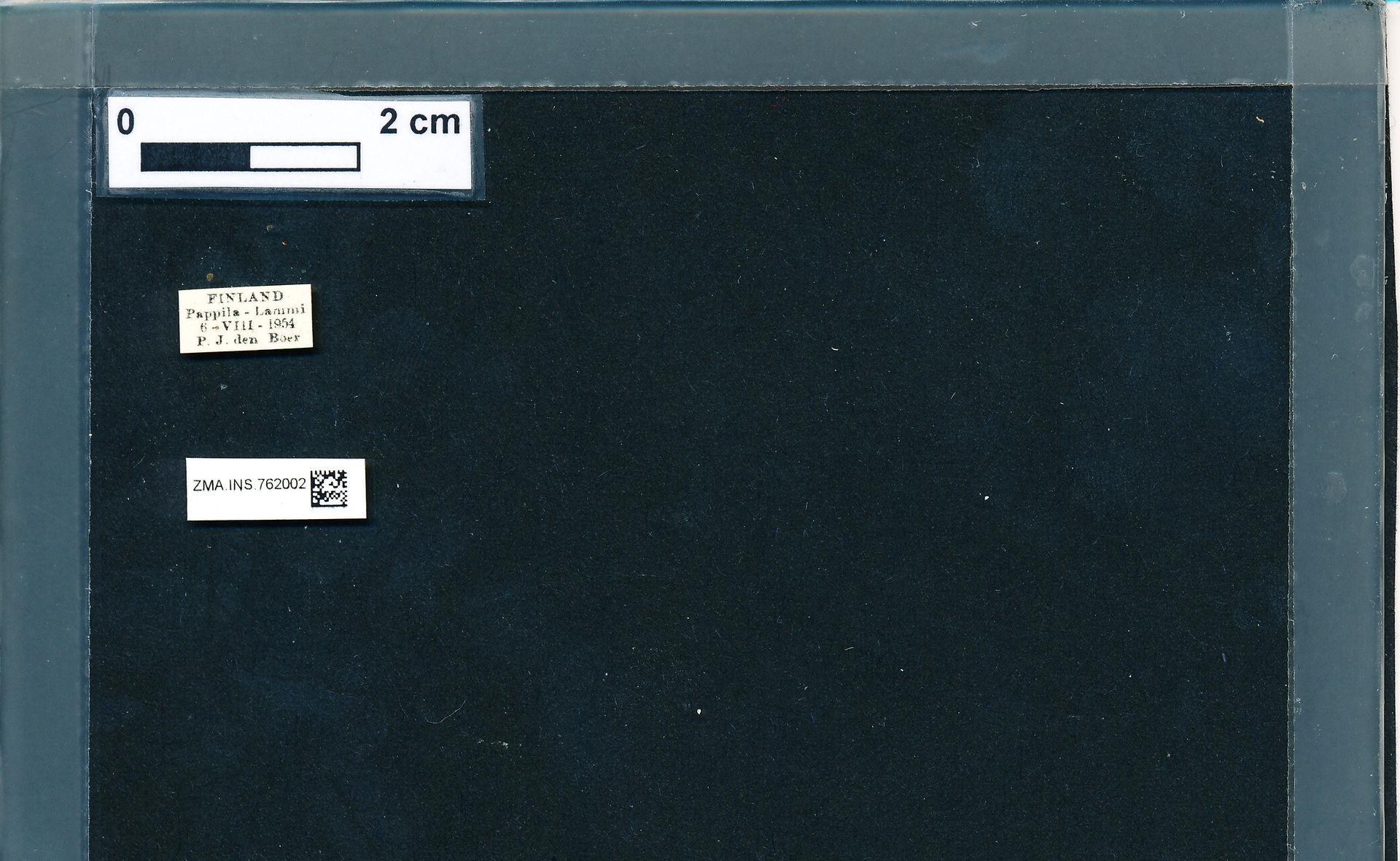 ZMA.INS.762002 | Bombus (Pyrobombus) pratorum pratorum (Linnaeus, 1761)