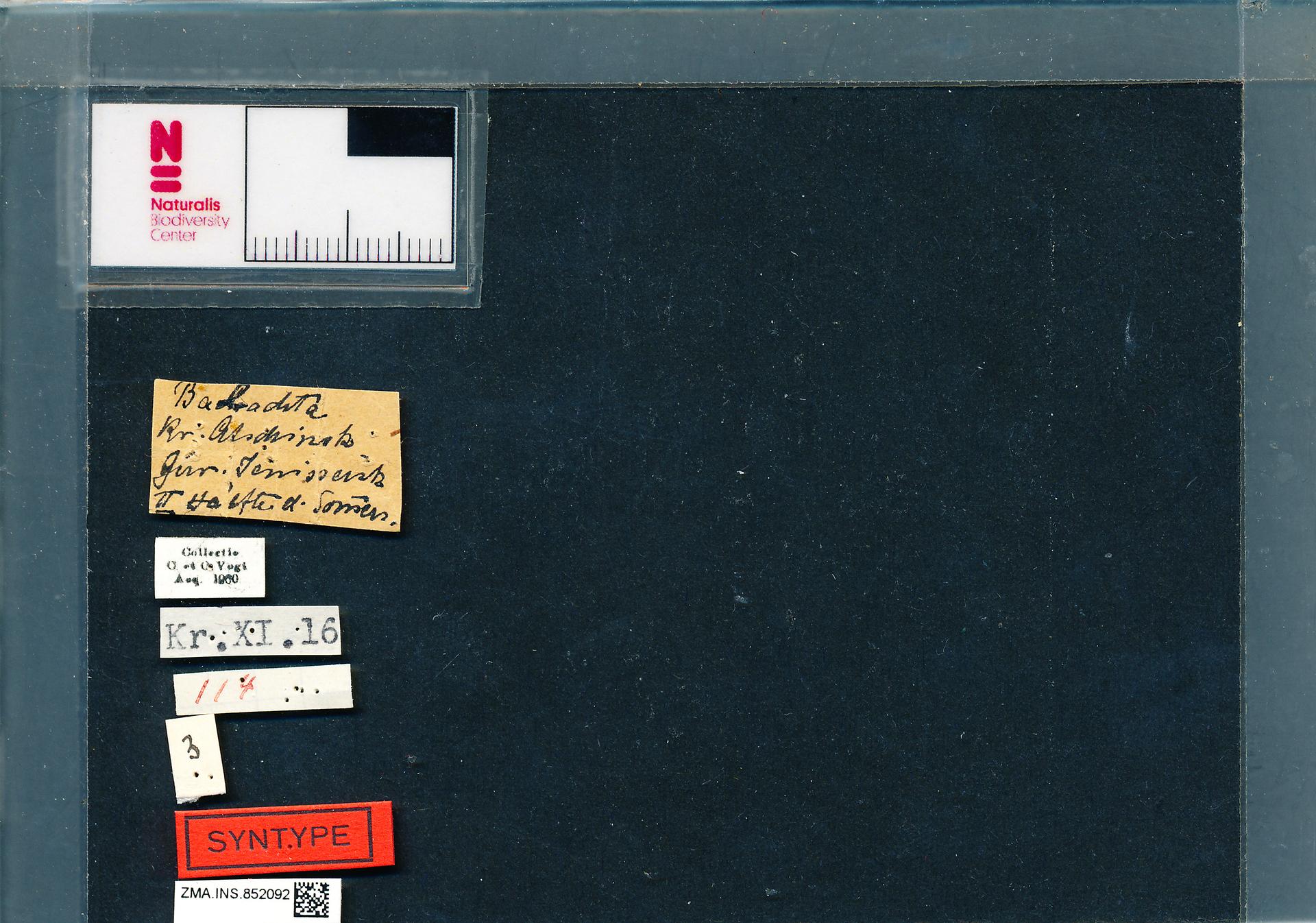 ZMA.INS.852092 | Bombus (Psithyrus) rupestris orientalis Reinig, 1936