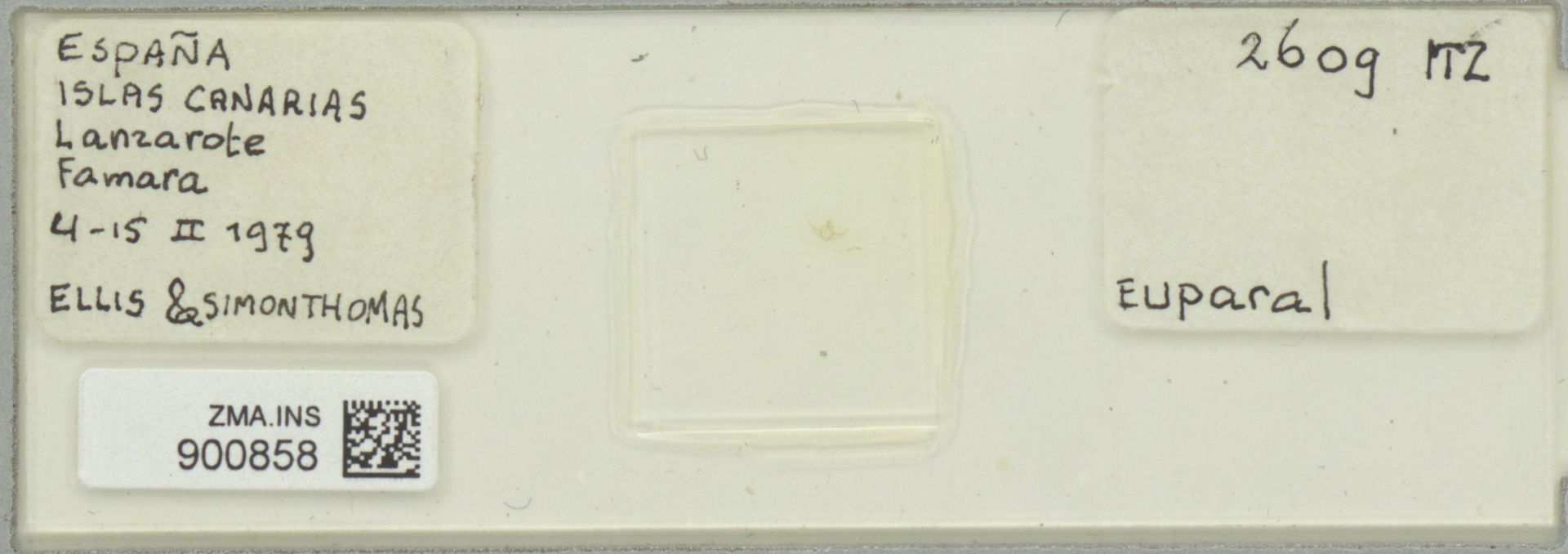 ZMA.INS.900858 | Pyralidae