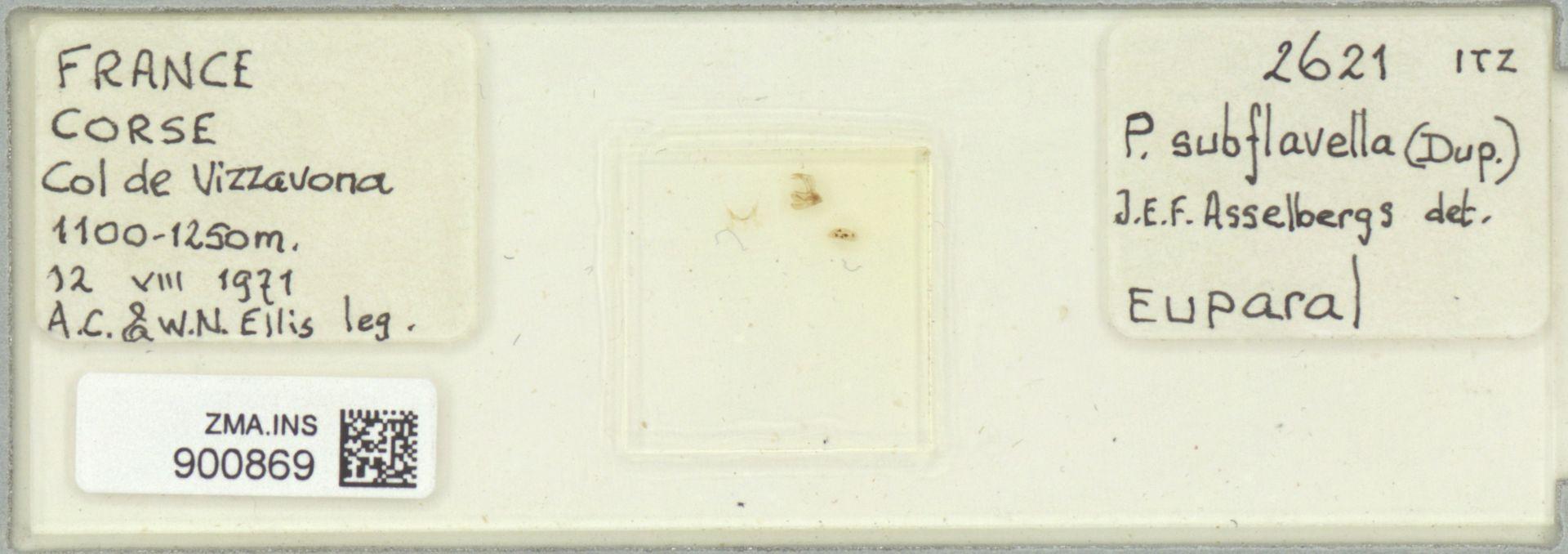 ZMA.INS.900869 | Pediasia subflavella