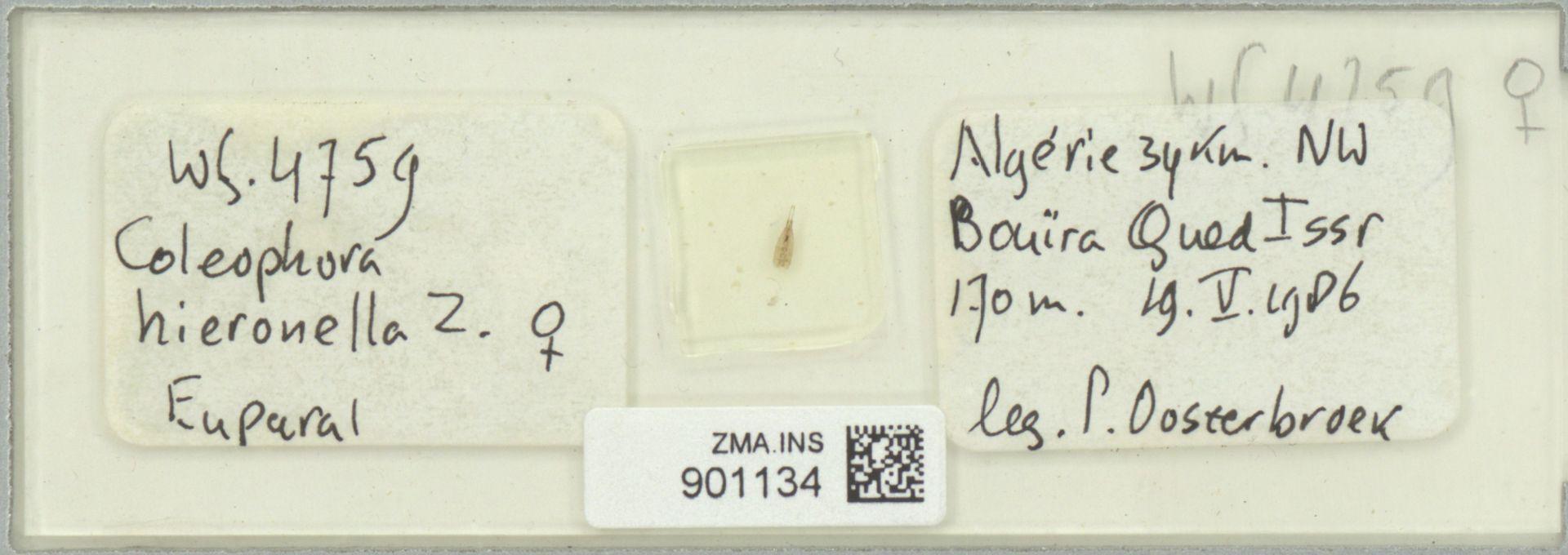 ZMA.INS.901134 | Coleophora hieronella Z.