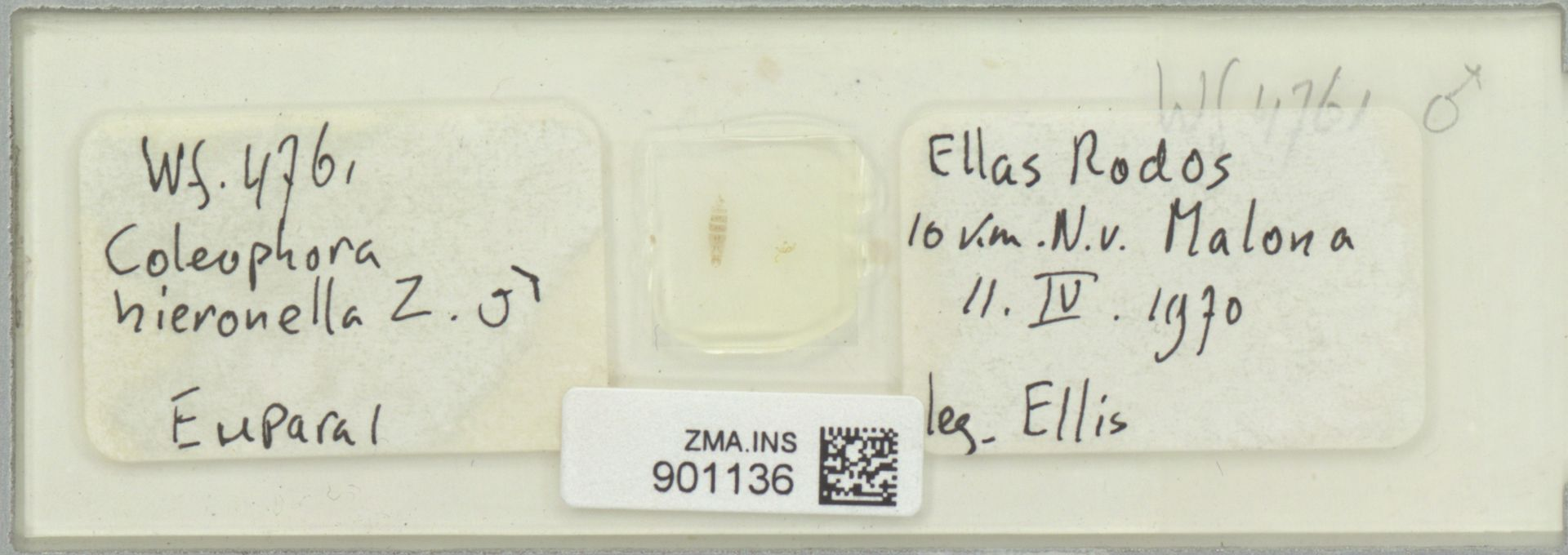 ZMA.INS.901136 | Coleophora hieronella