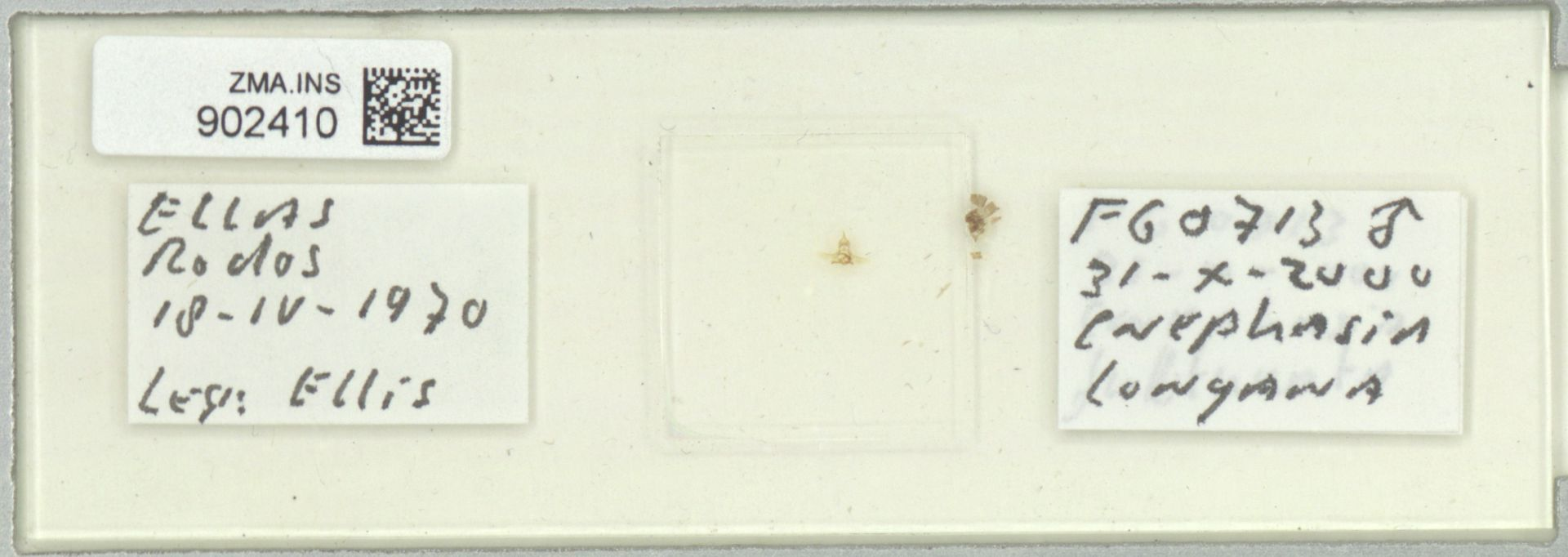 ZMA.INS.902410   Cnephasia longana