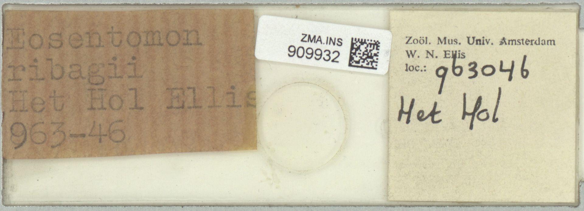 ZMA.INS.909932 | Eosentomon ribagii