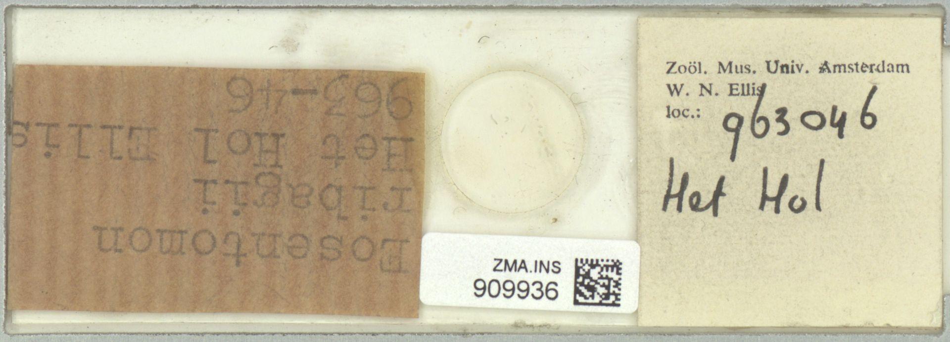 ZMA.INS.909936 | Eosentomon ribagii