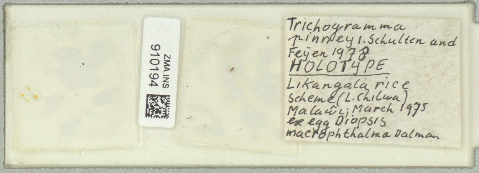 ZMA.INS.910194 | Trichogramma pinneyli Schulten & Feijen 1978