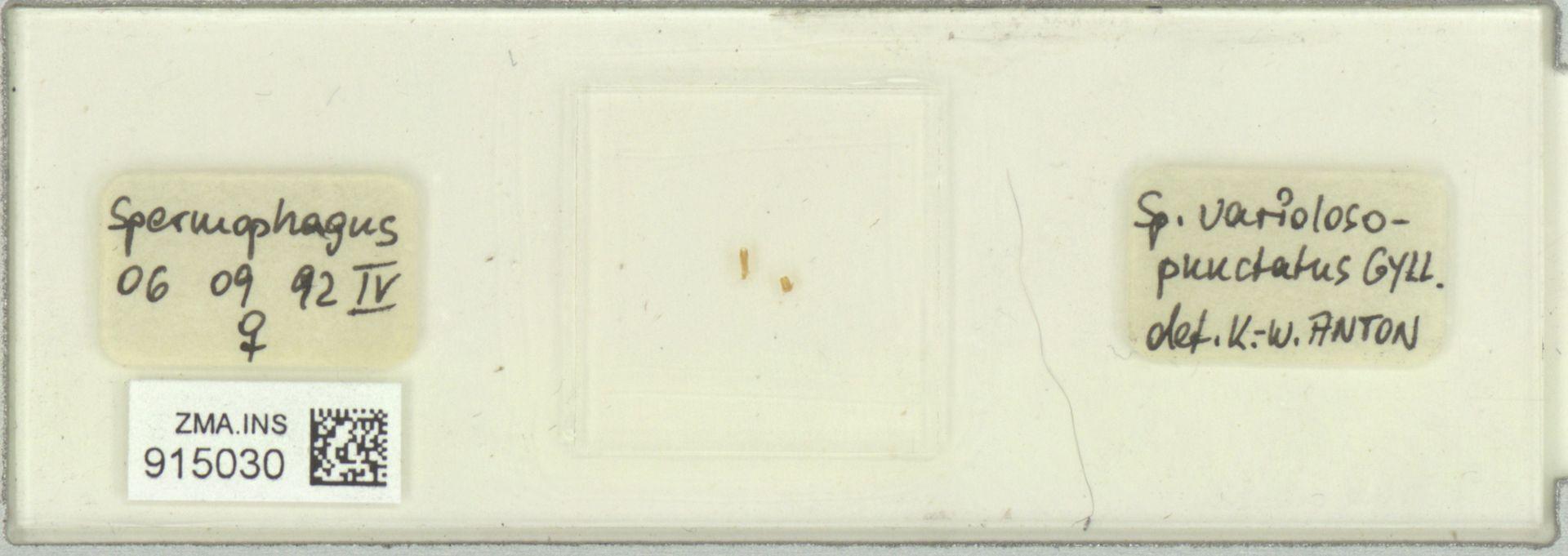 ZMA.INS.915030 | Spermophagus