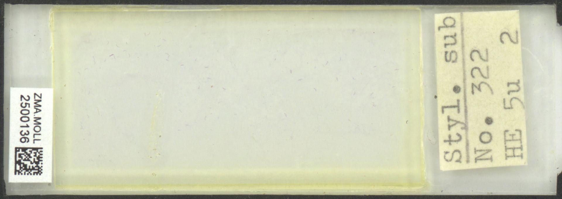 ZMA.MOLL.2500136 | Styliola subula (Quoy & Gaimard, 1827)