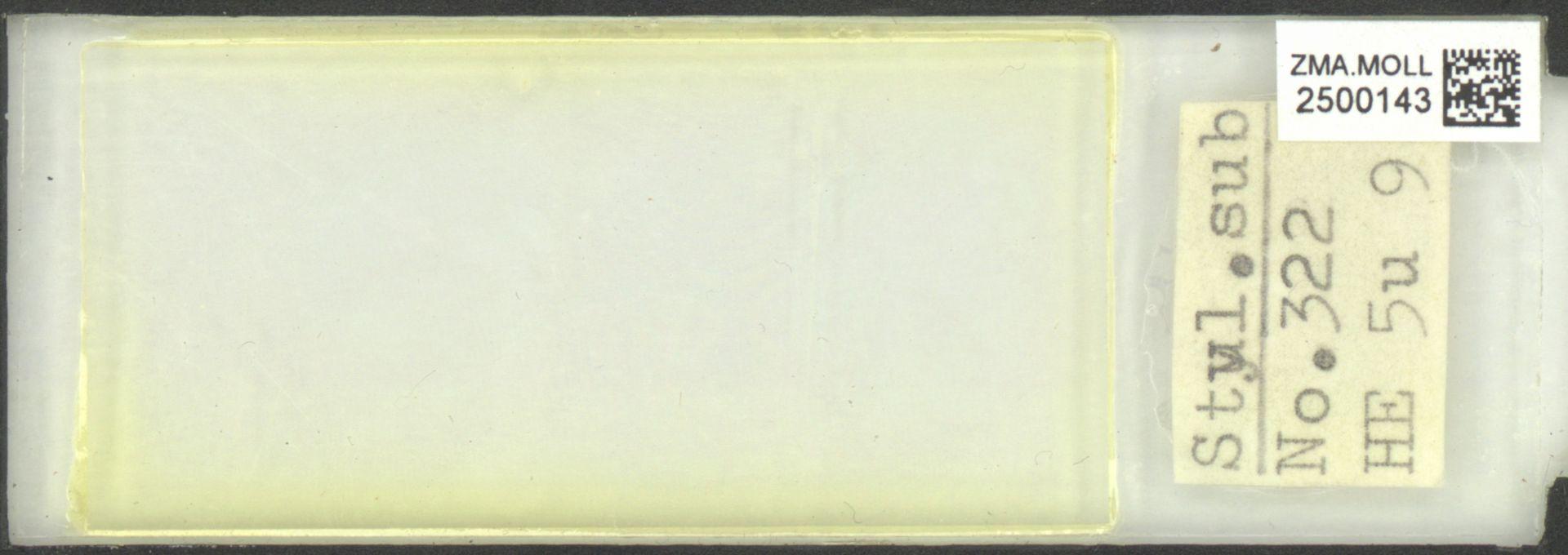 ZMA.MOLL.2500143 | Styliola subula (Quoy & Gaimard, 1827)