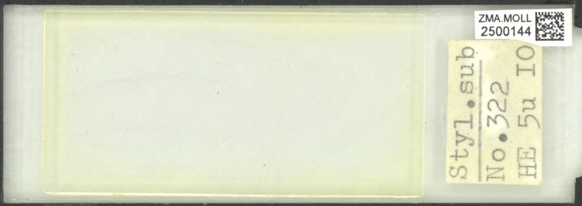 ZMA.MOLL.2500144 | Styliola subula (Quoy & Gaimard, 1827)