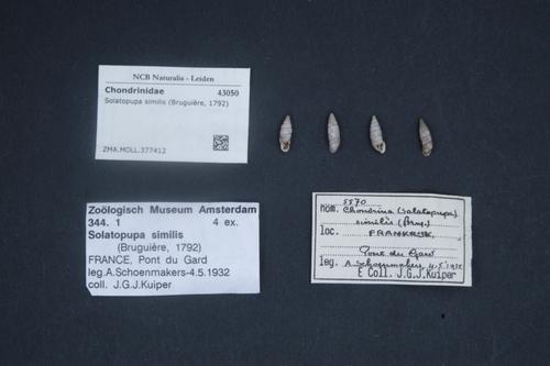 Solatopupa similis image