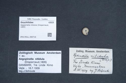 Aegopinella nitidula image